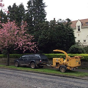 Professional hedge trimming and maintenance in scotland by tree surgeon