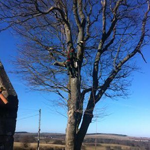 Tree pruning and crown reduction by tree surgeon scotland